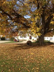 Baum, Herbst, Metall, Baum, Erde